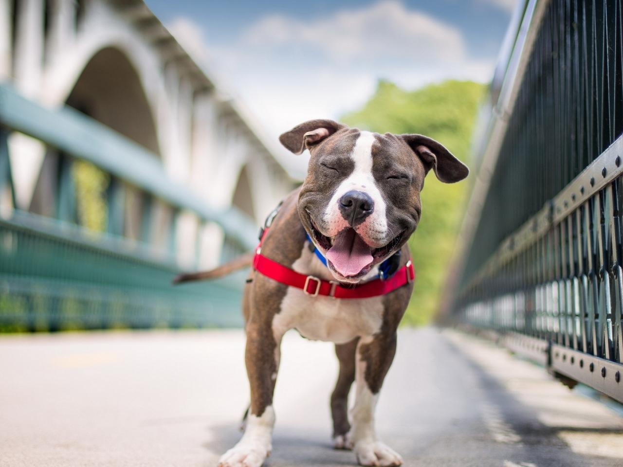 Perros felices - 1280x960
