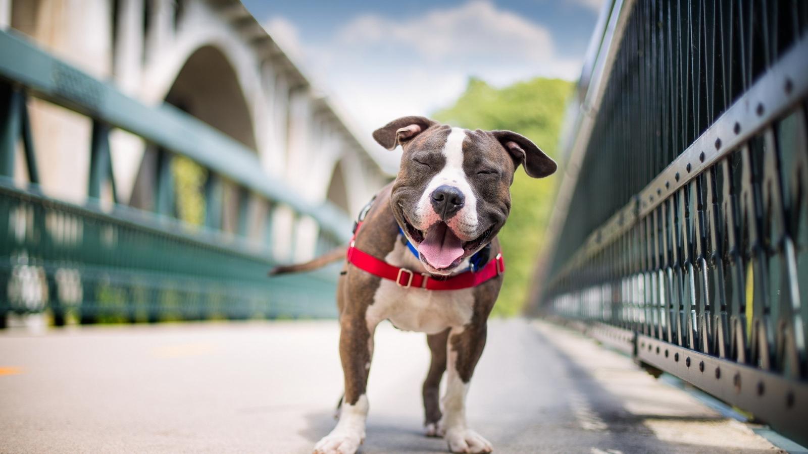 Perros felices - 1600x900