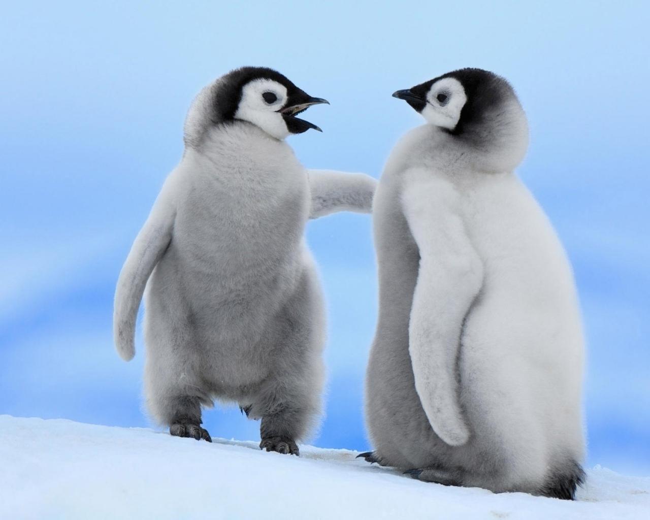 Pinguinos bebes - 1280x1024