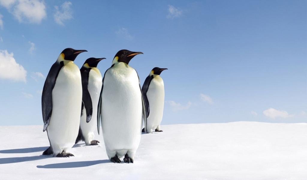 Pinguinos - 1024x600
