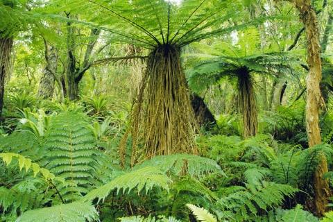 Arboles de selva tropical hd 480x320 - imagenes - wallpapers ...