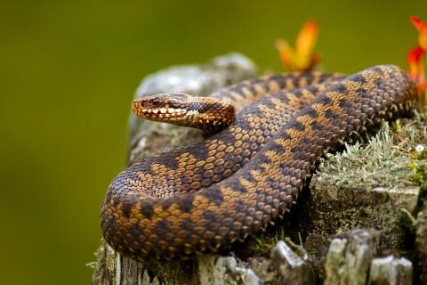Serpientes venenosas - 480x320