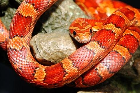 Serpientes - 480x320