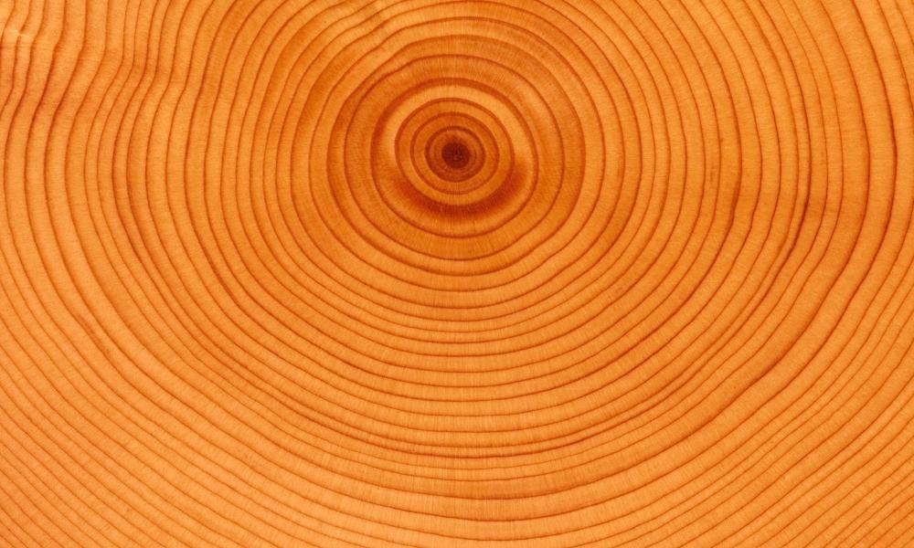 Textura de anillos de árbol - 1000x600