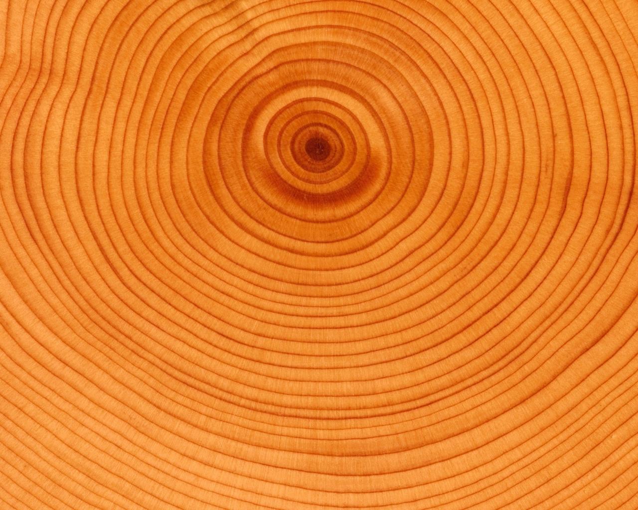 Textura de anillos de árbol - 1280x1024