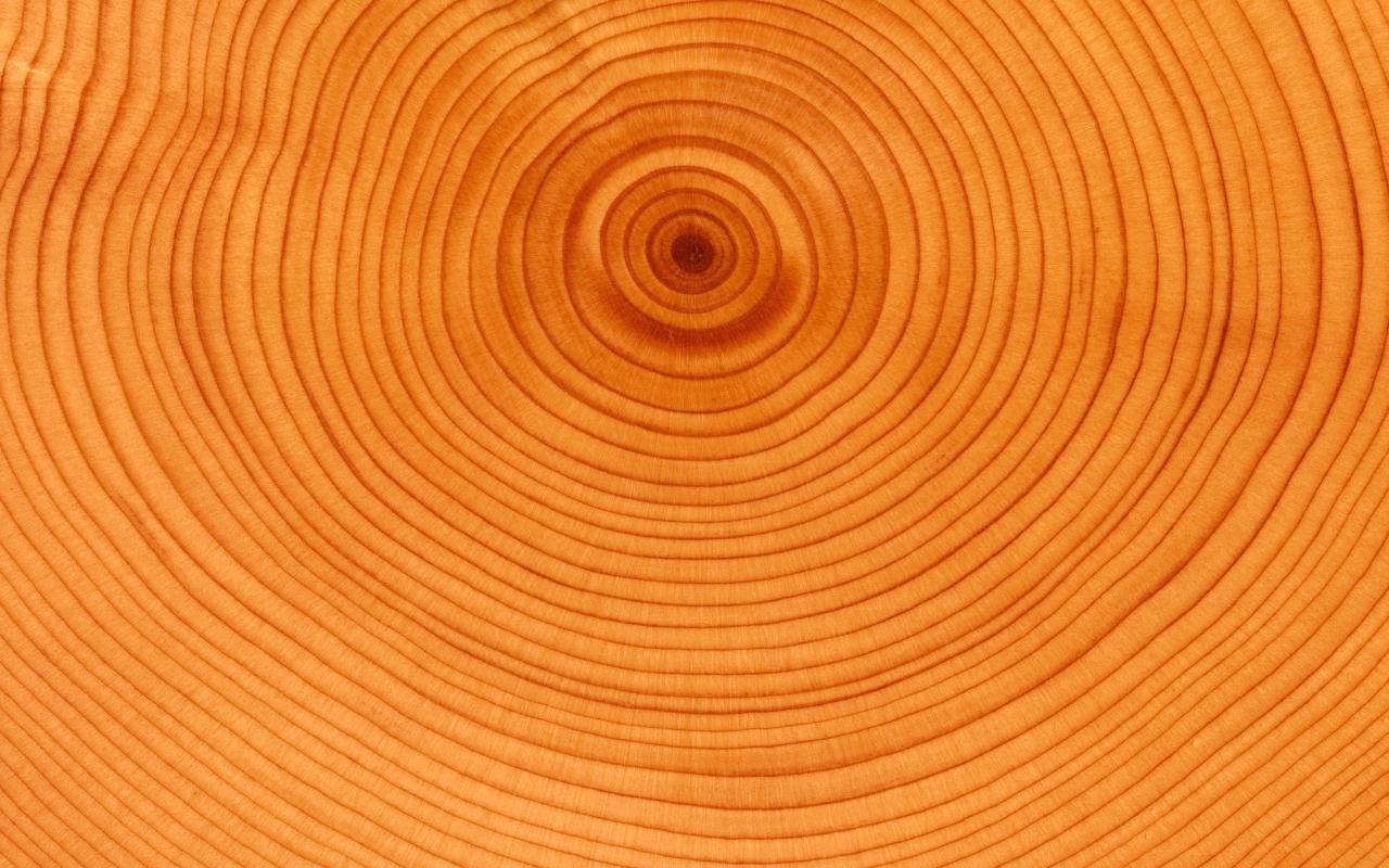 Textura de anillos de árbol - 1280x800