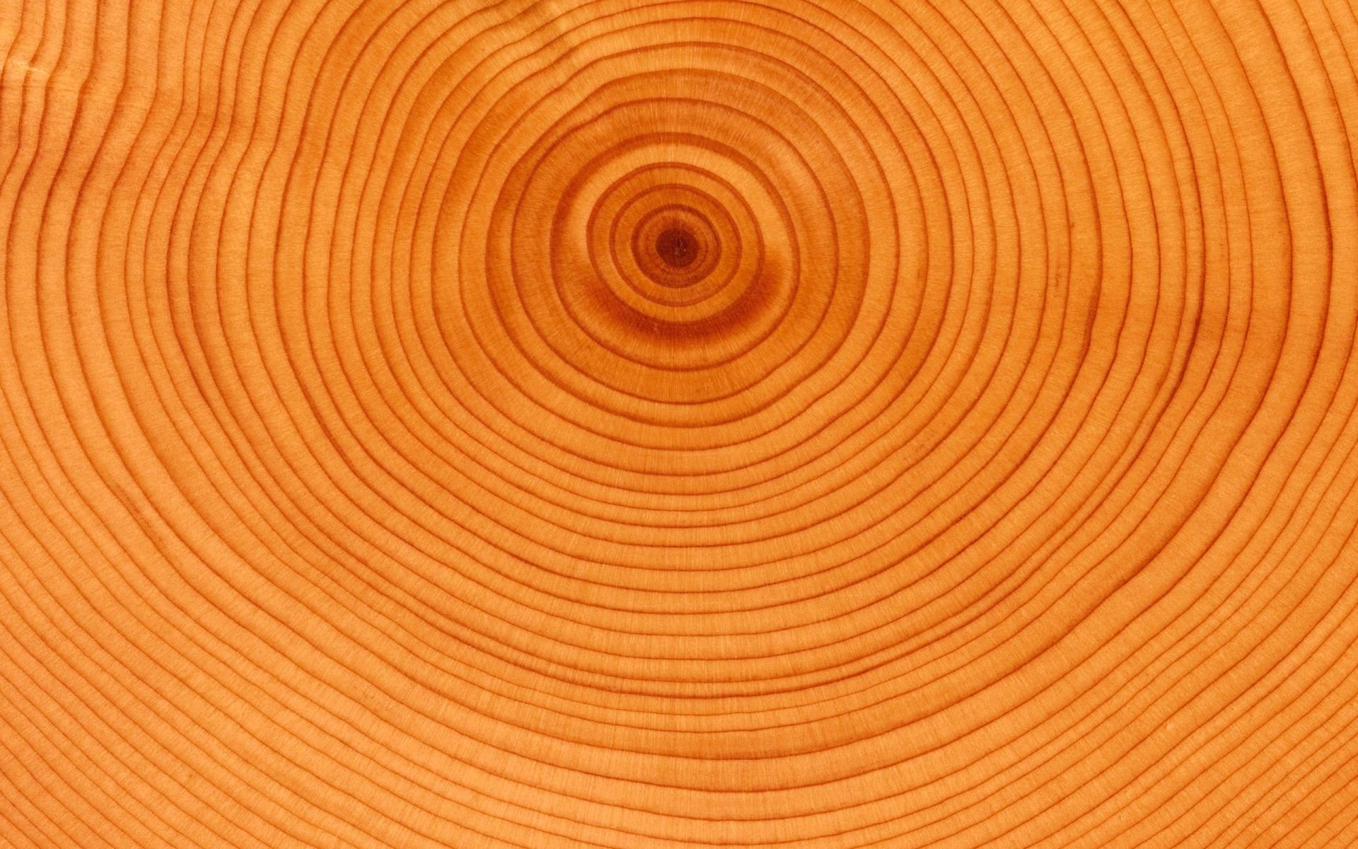 Textura de anillos de árbol - 1920x1200