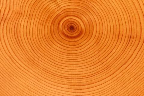 Textura de anillos de árbol - 480x320