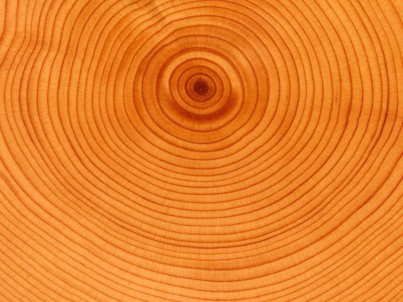 Textura de anillos de árbol - 800x600