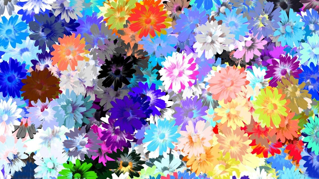Textura de flores - 1280x720