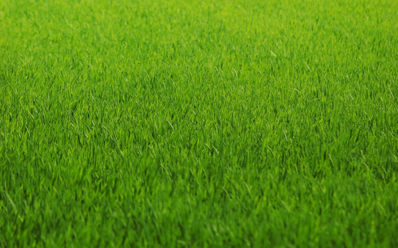 Textura de Grass - 1440x900