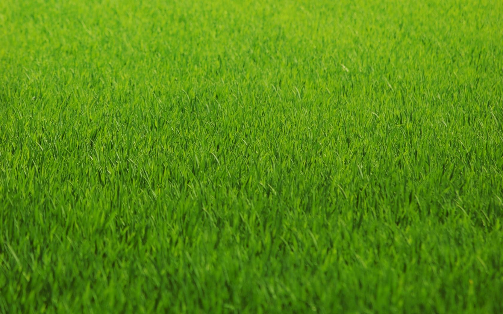 Textura de grass hd 1680x1050 imagenes wallpapers gratis variados fondos de pantallas hd - Cesped japones fotos ...