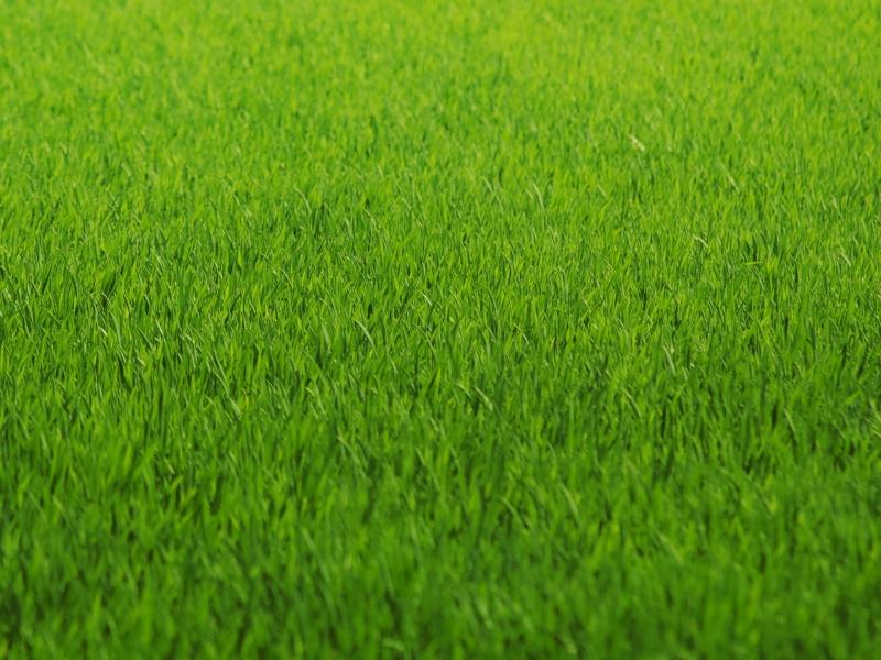 Textura de Grass - 800x600