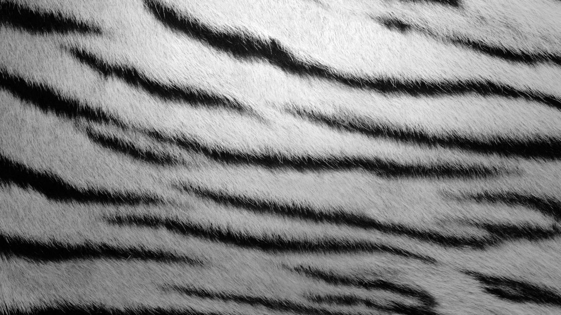 textura de piel de cebra 1152x864 1560 jpg Car Pictures