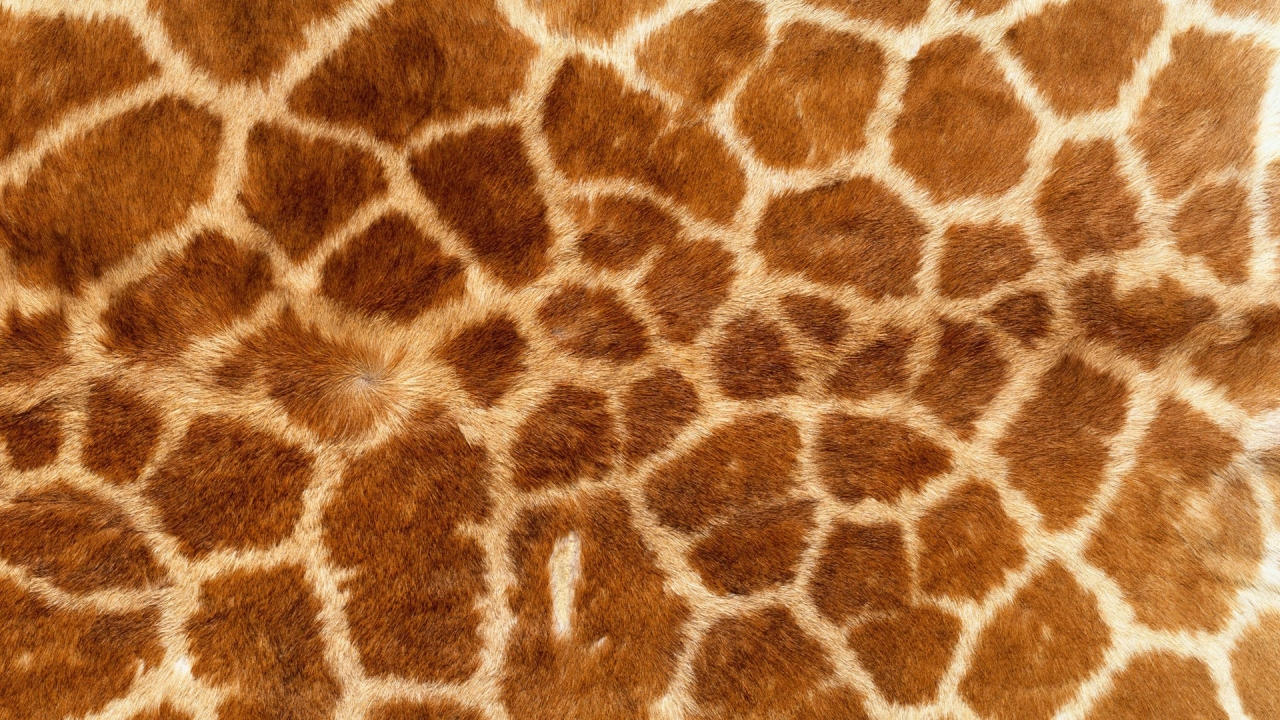 Textura de piel de jirafas - 1280x720