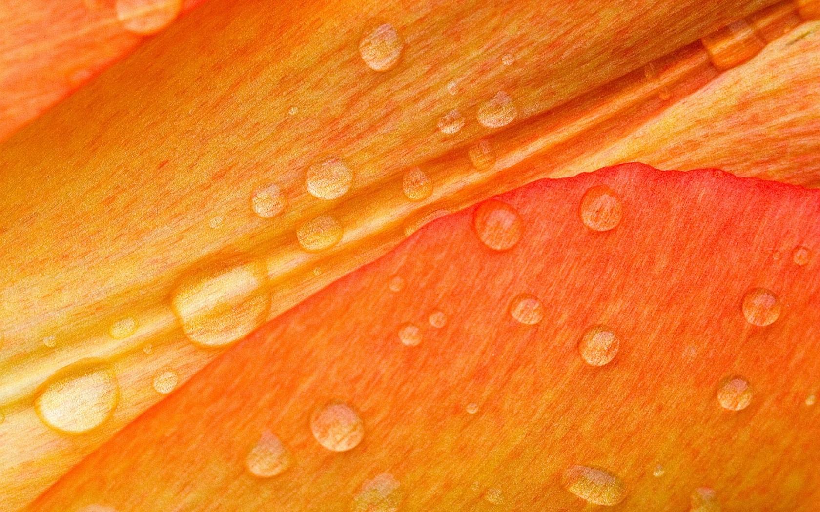Textura naranja - 1680x1050