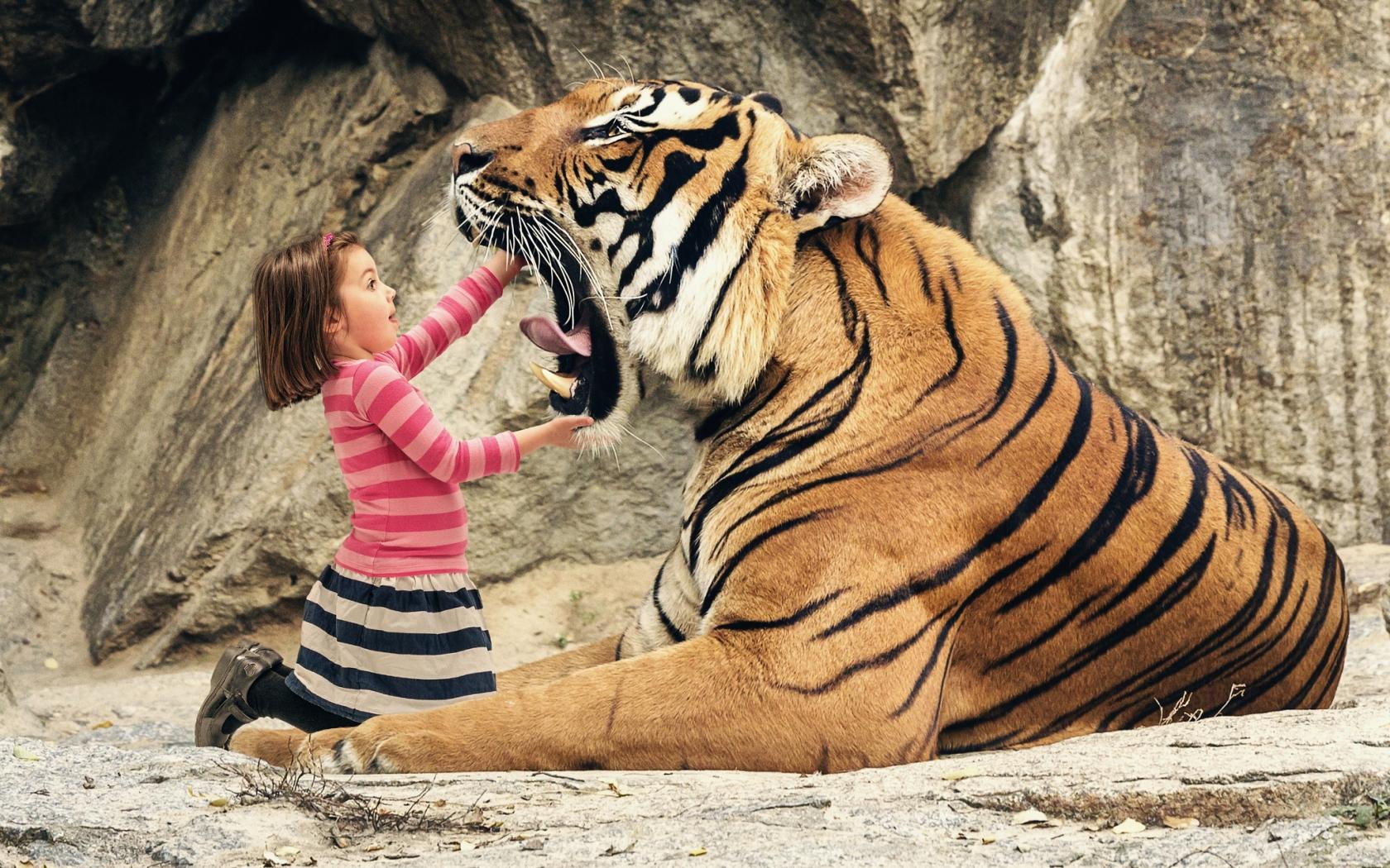 Tigre con boca abierta - 1680x1050