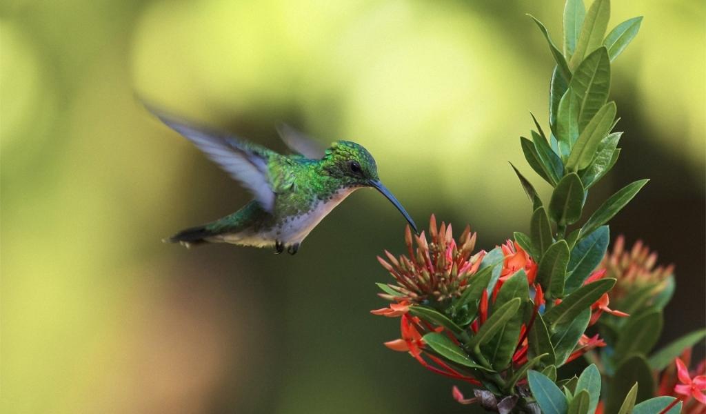 Un colibrí en una flor - 1024x600