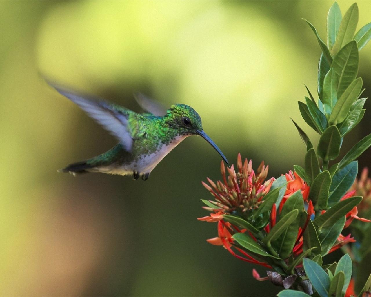Un colibrí en una flor - 1280x1024