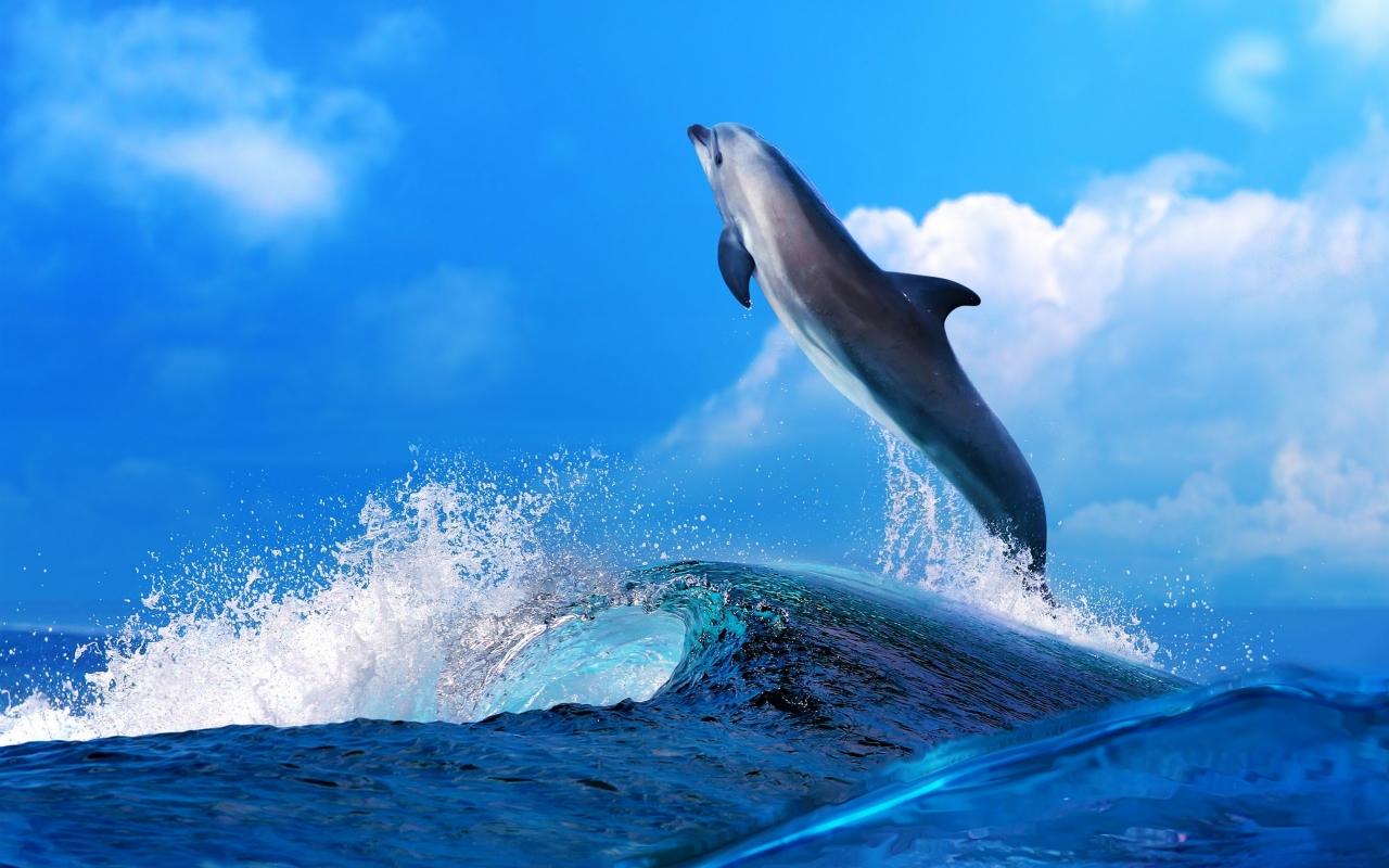 Un delfín saltando - 1280x800