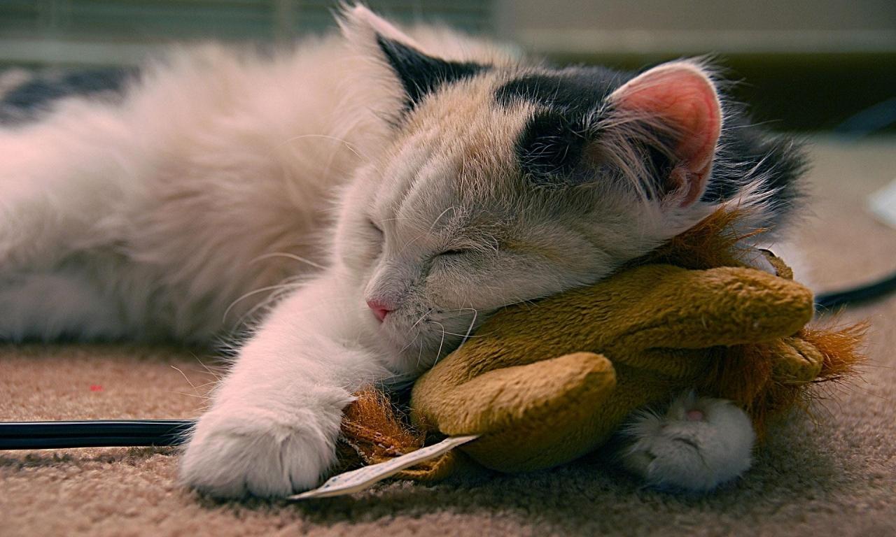 Un gato durmiendo - 1280x768