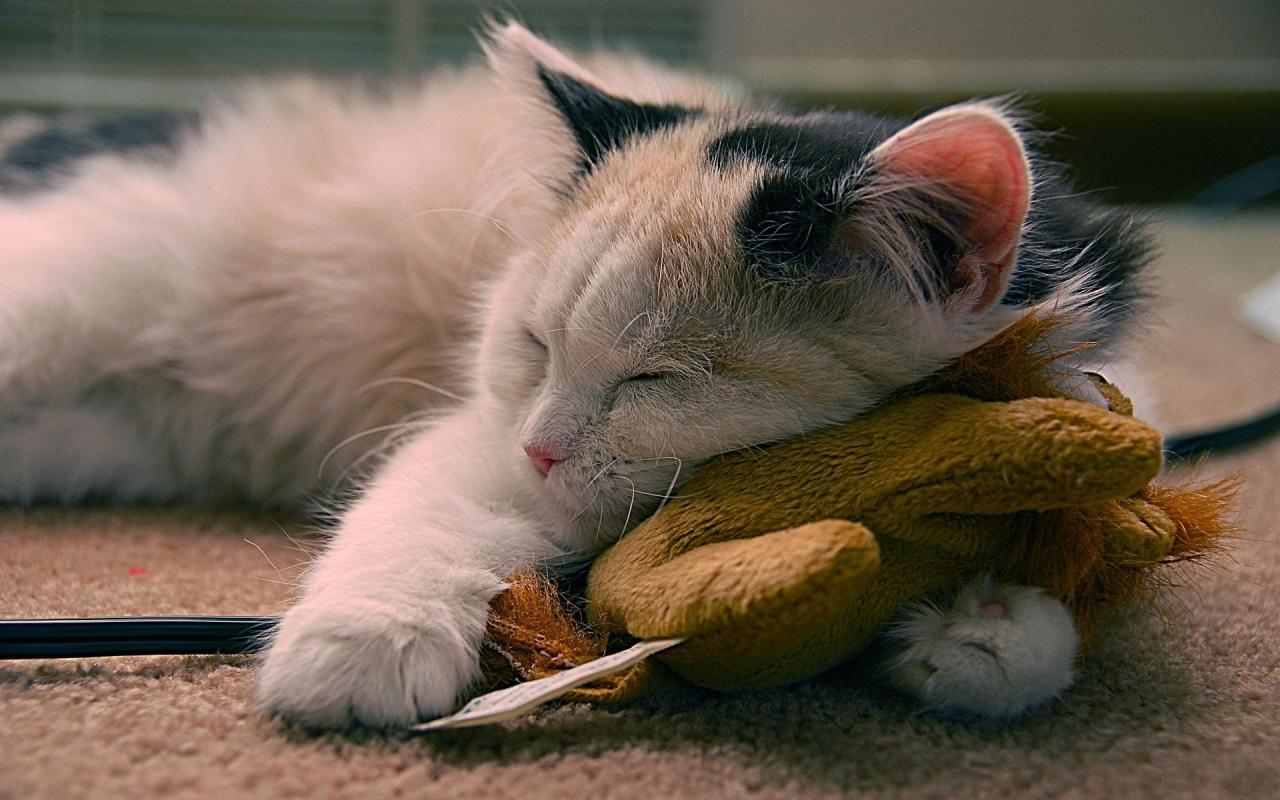 Un gato durmiendo - 1280x800