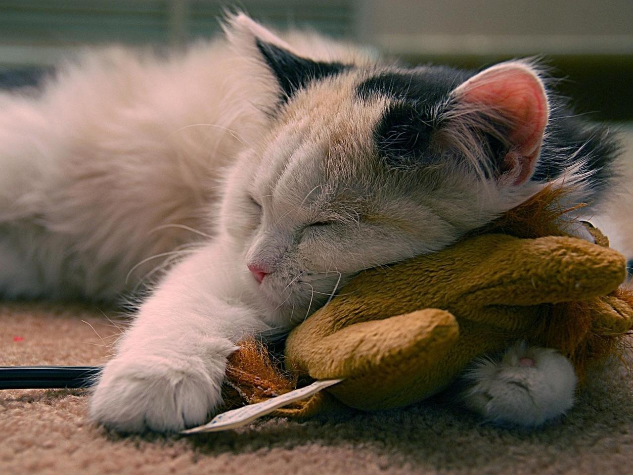 Un gato durmiendo - 1280x960