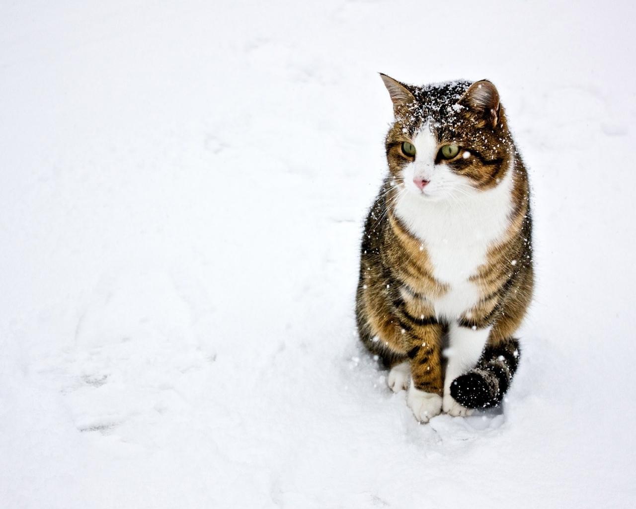 Un gato paseando en la nieve - 1280x1024
