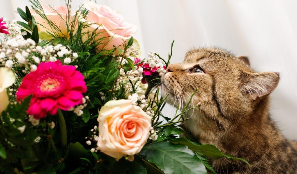 Un gato y rosas - 1024x600