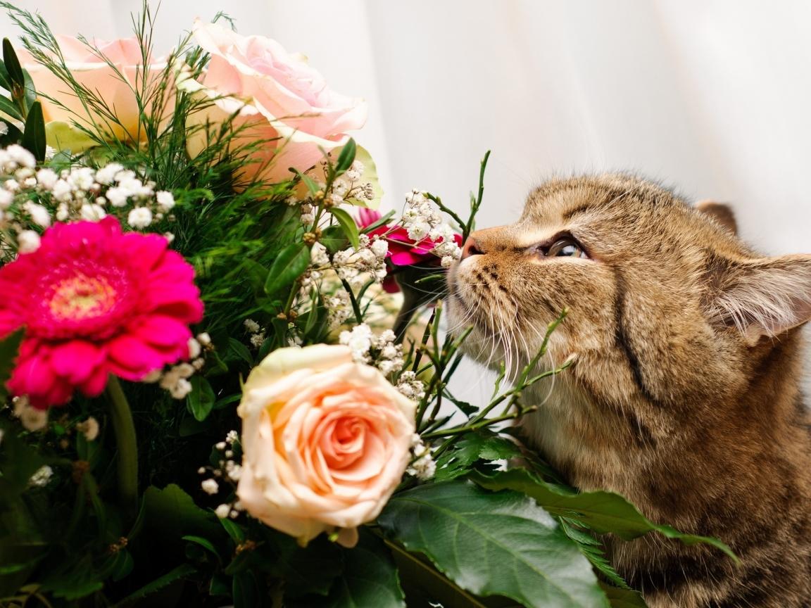 Un gato y rosas - 1152x864