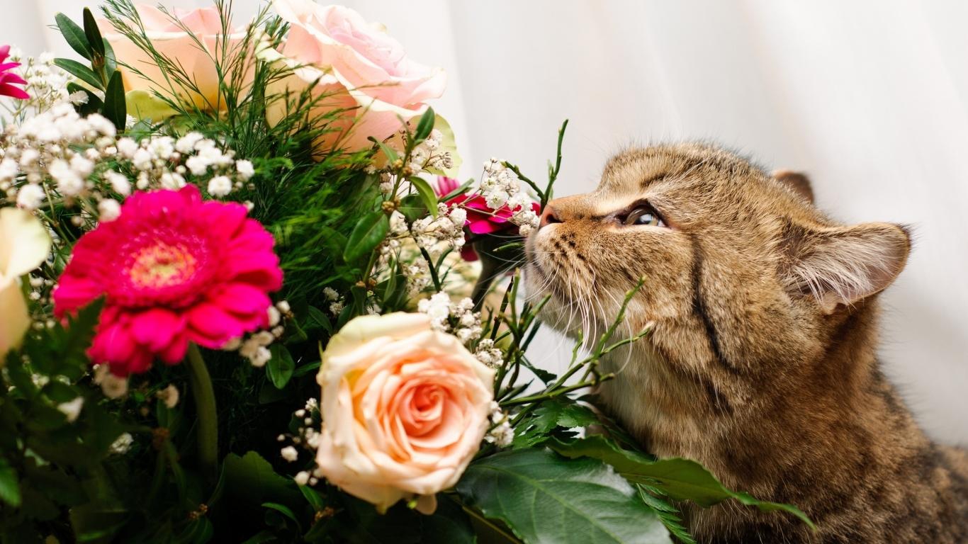 Un gato y rosas - 1366x768
