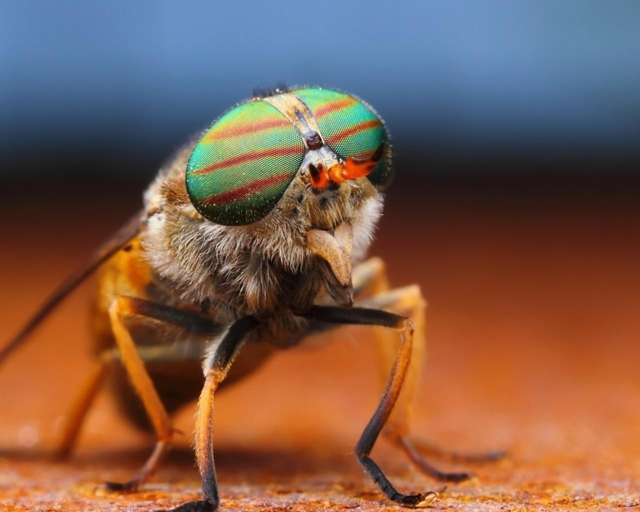 Un insecto - 1280x1024