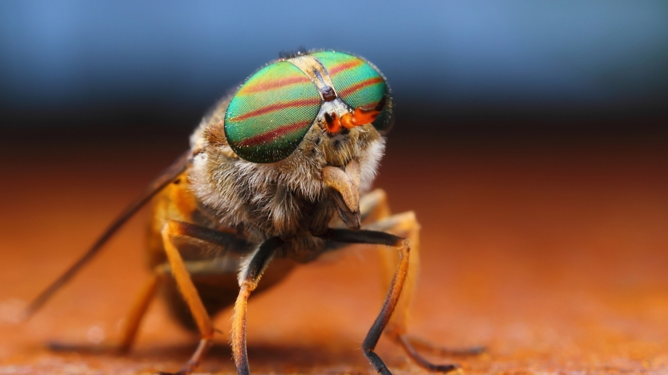 Un insecto - 1366x768