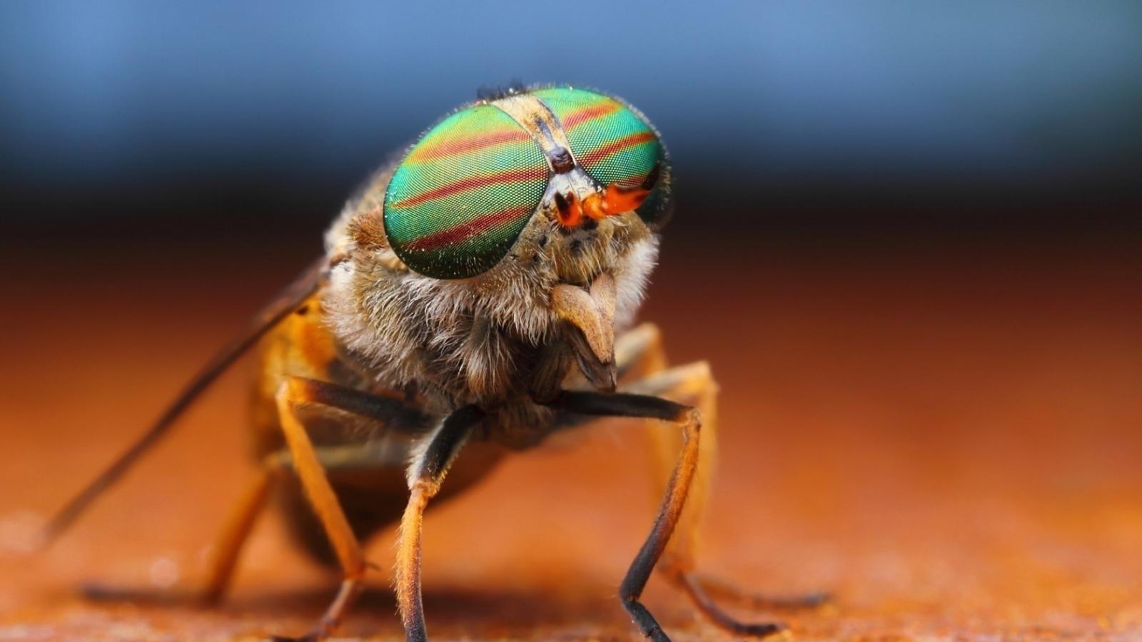 Un insecto - 1600x900