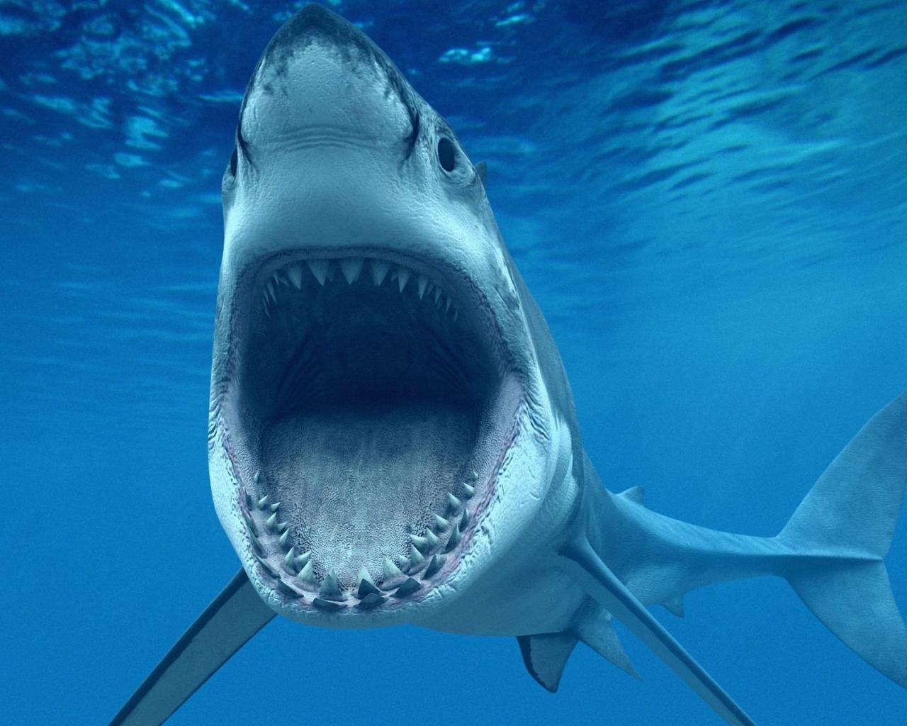 Un tiburón hambriento - 1280x1024