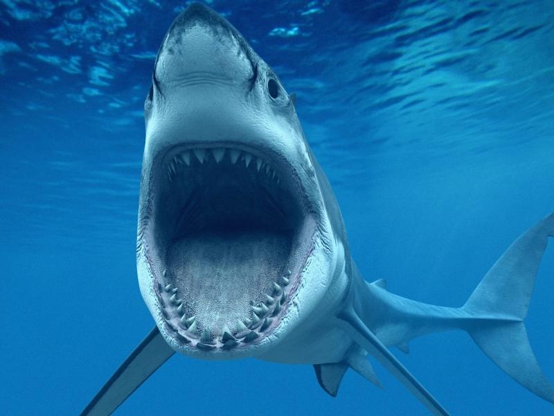 Un tiburón hambriento - 800x600