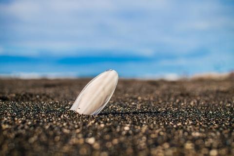 Una concha en la playa - 480x320