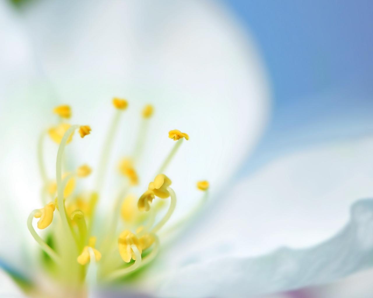 Una flor blanca en macro - 1280x1024