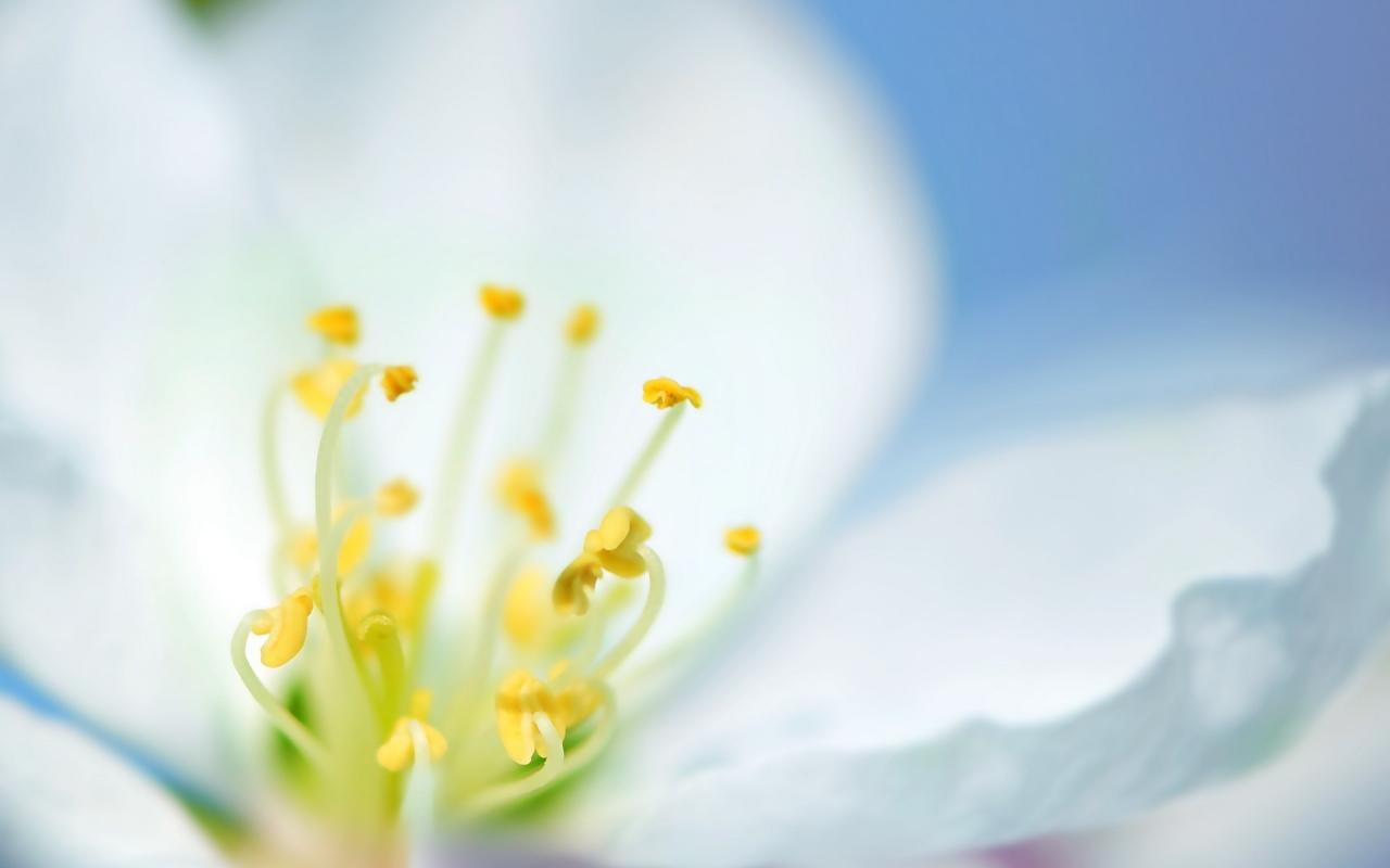 Una flor blanca en macro - 1280x800