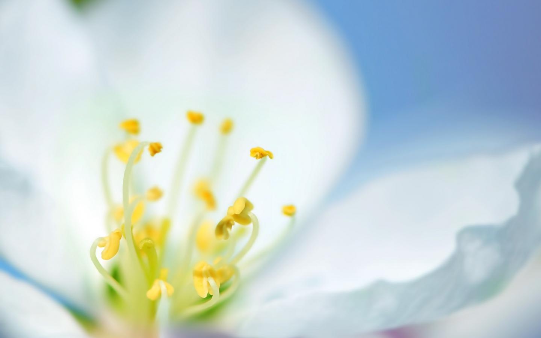 Una flor blanca en macro - 1440x900