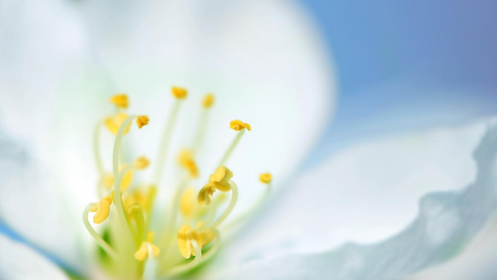 Una flor blanca en macro - 1600x900