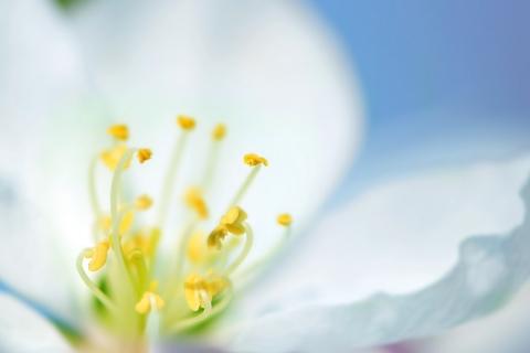 Una flor blanca en macro - 480x320