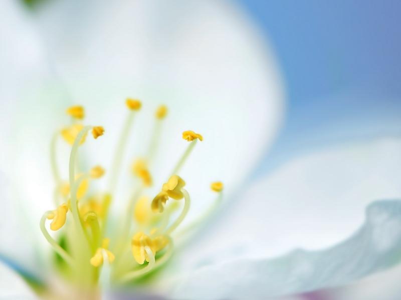 Flores Blancas Png 800 600: Una Flor Blanca En Macro Hd 800x600