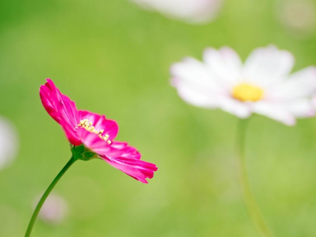 Una flor fucsia - 1024x768