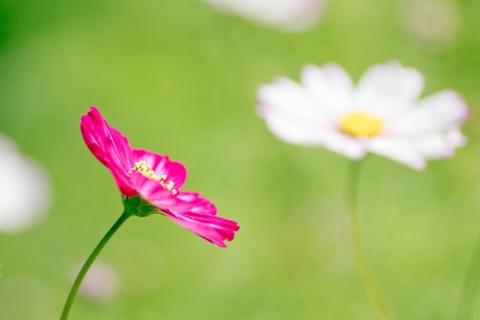 Una flor fucsia - 480x320