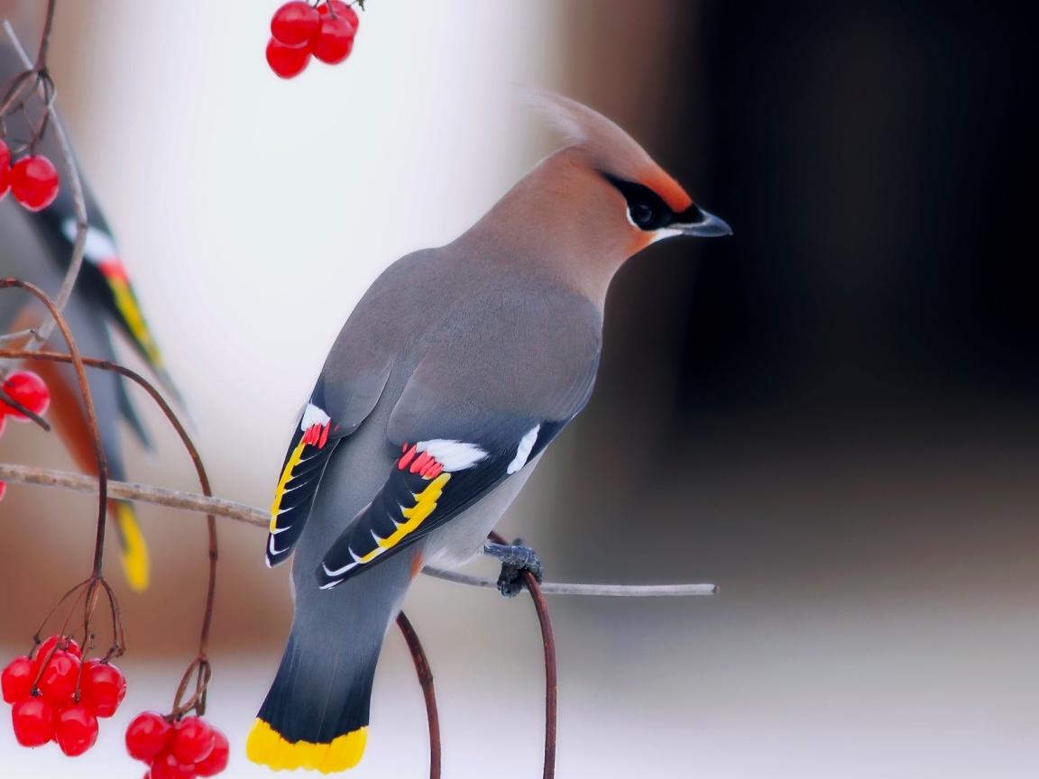 Una hermosa ave - 1152x864