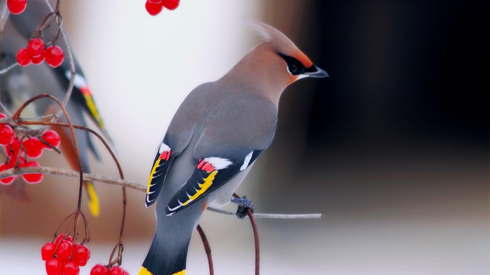 Una hermosa ave - 1600x900