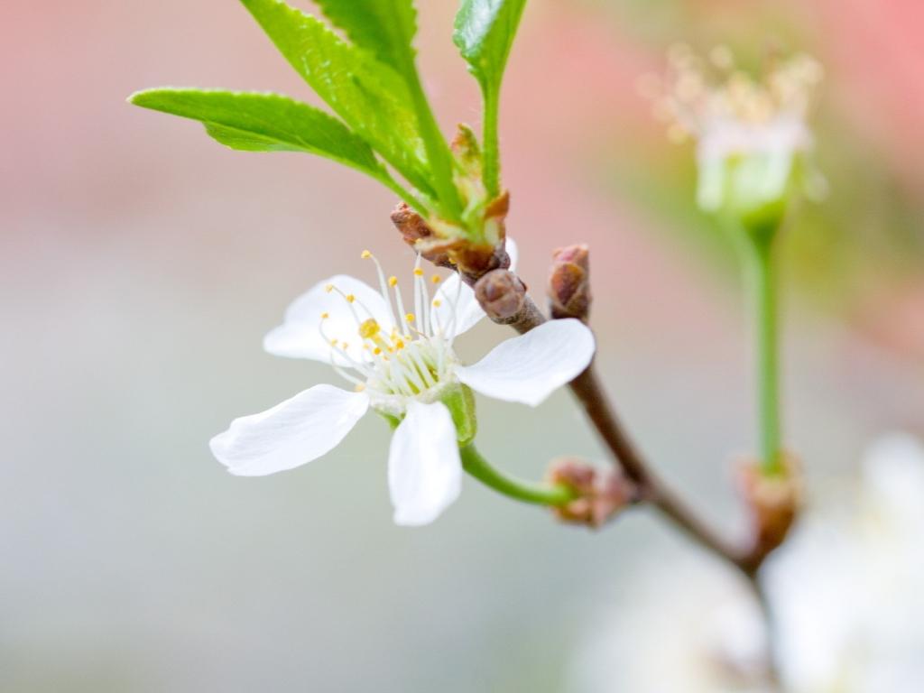 Una hermosa flor blanca - 1024x768