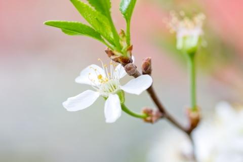 Una hermosa flor blanca - 480x320