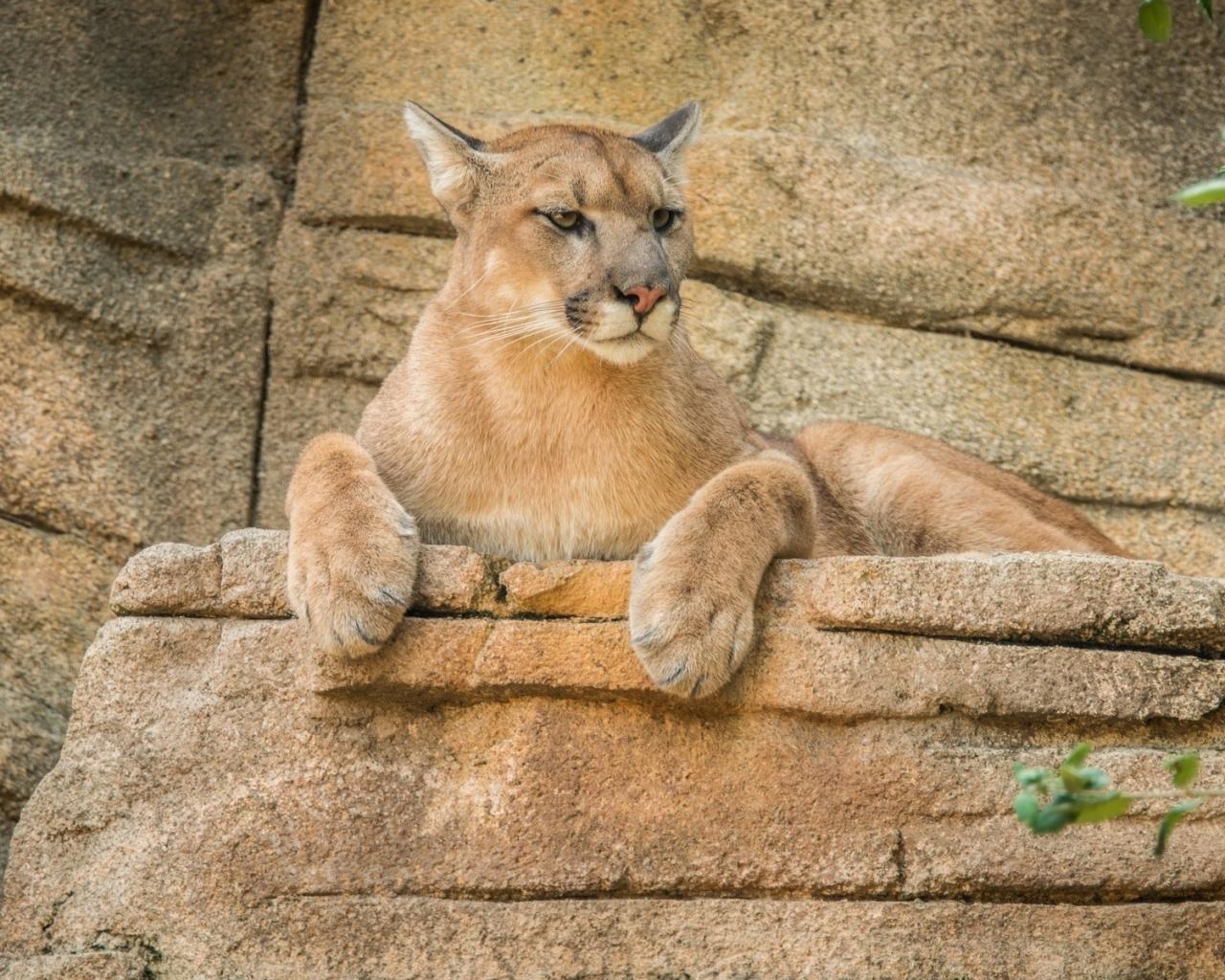 Una leona - 1280x1024